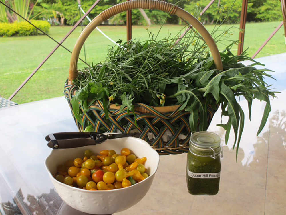Visit the bountiful organic garden just down the hill.  Fresh herbs and vegetables are  collected daily to enhance every  meal.